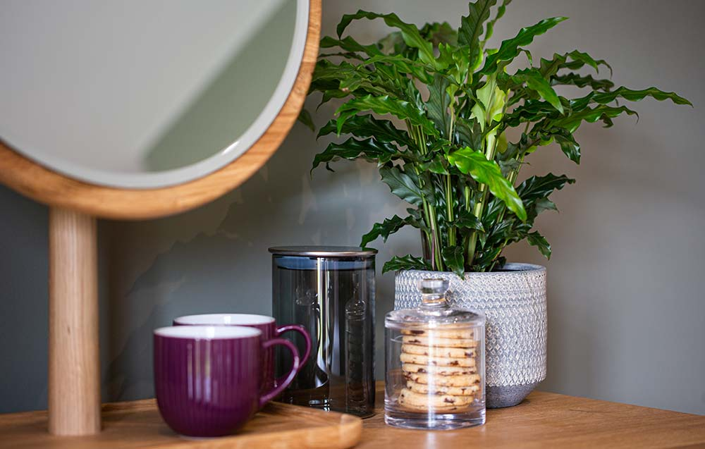 Mirror, mugs and plant